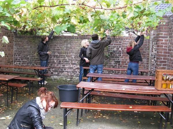 Schüler sammeln Weintrauben